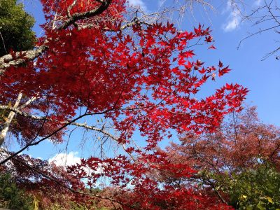 Autumn, Japan Tours, RediscoverTours.com