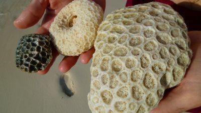 Corals in Miyakojima, Japan Tours, RediscoverTours.com
