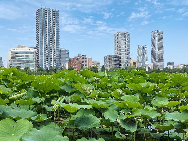 Ueno Park, Rediscover Tours